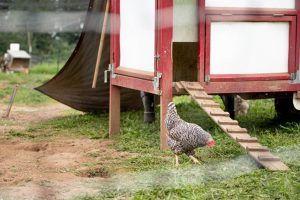 zenger farms chicken coop